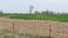 Cover crops reduce eroision