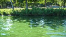 nutrients running from lawns can cause algae blooms
