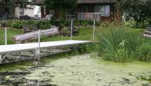 Thick green algae covers the lake along the shoreline of a backyard by a white dock.