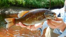 A man standing by a river holds a smallmouth bass up to the camera.