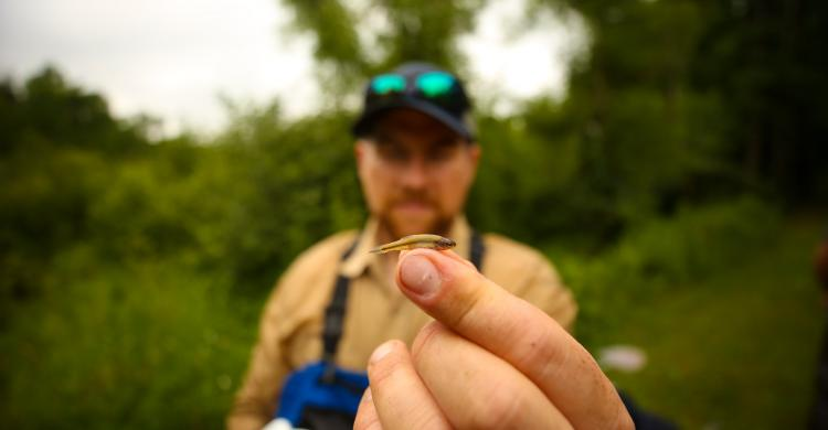 MPCA field staff holds a small fish