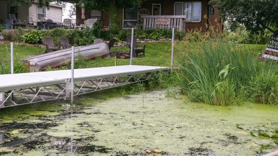 A metal dock goes out into a lake covered with green scum by the shoreline.