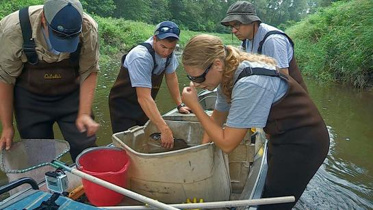 Four people in brown waders stand in a stream around a fishing boat, taking fish out of plastic containers and placing them in a net to be weighed.