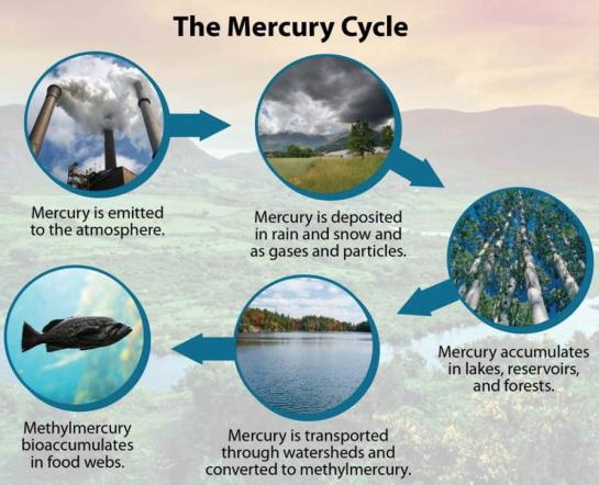 Mercury cycle graphic