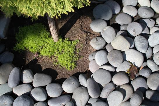 Q uses a blend of rocks and moss to create interesting spaces along the side of his house.