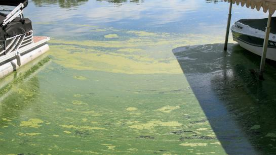 Dark green algae covers the surface of a lake near the shore between a boat in a hoist and a pontoon.