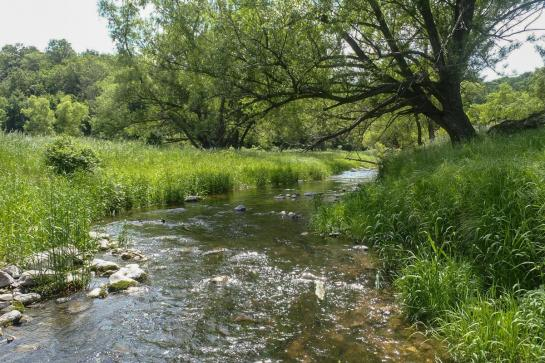 Small stream running through banks of tall green grass past a tree