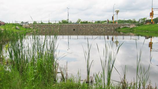 A still, reflective stormwater pond surrounded by cattails and long grass next to a roadway.