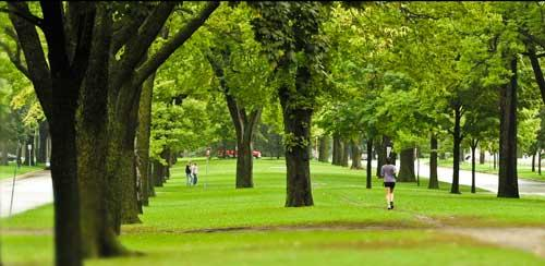 Benefits Of Trees Minnesota Pollution Control Agency
