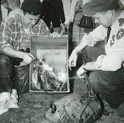 Old photo of people looking at dead fish