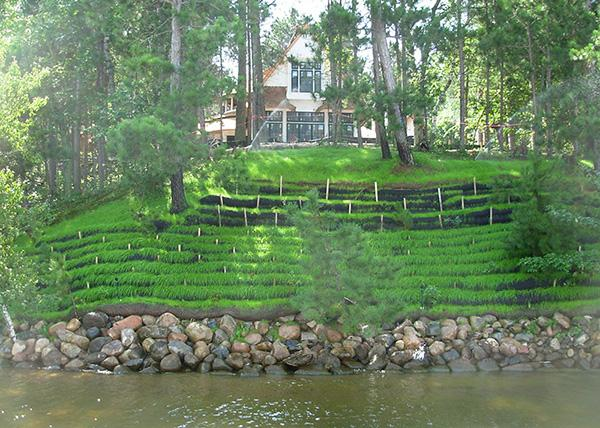 Tall bank on lakeshore with terraces of bright green grass