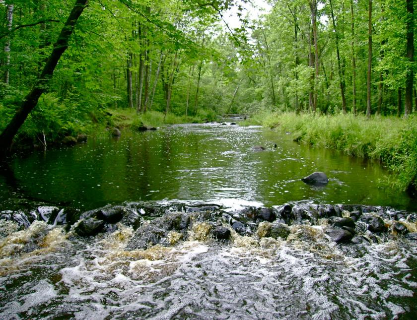 Small river flows calmly through green woods until running over rocks in foreground