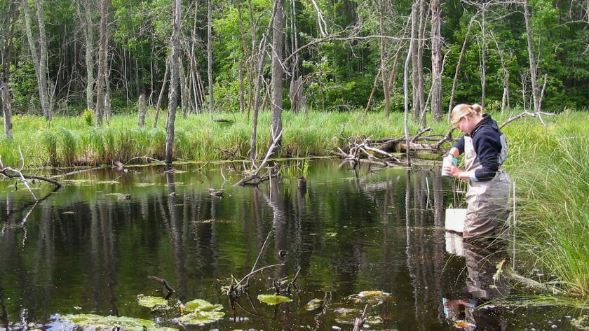 A woman in waders stands in the water of a wetland area, reaching into a small blue container.