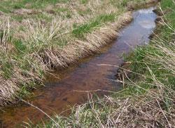 Natural vegetative buffer helps filter sediment from runoff.