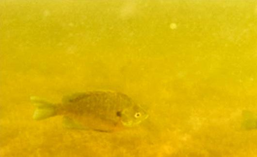 Fish under water at Snail Lake