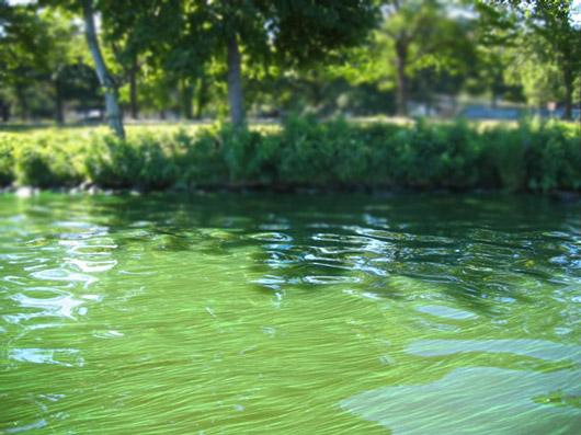 river with excessive algae growth