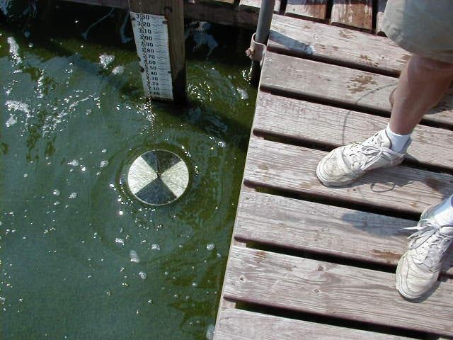 Checking water clarity with a Secchi disk