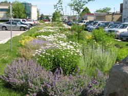 Parking lot plants help filter rain water