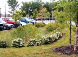 Parking Lot Bioretention