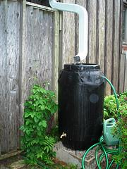 Rain barrel for collecting rain off your roof