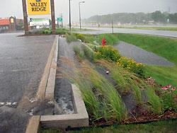 Rain garden in Stillwater, Minnesota
