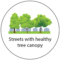 Healthy tree canopies on streets
