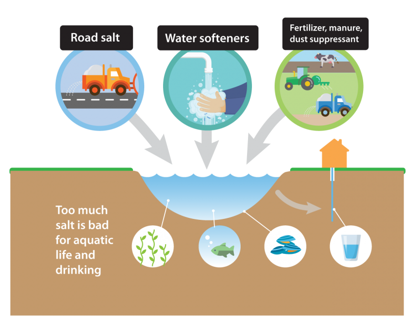 Road salt, water softeners, and fertilizer, manure, and dust suppressants all add salt to our water. Too much salt is bad for aquatic life like plants and fish, and is bad for drinking.