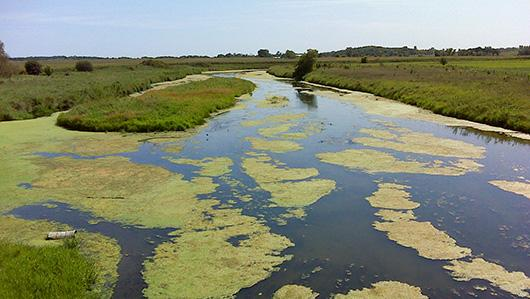 shell-rock-river-with-algae