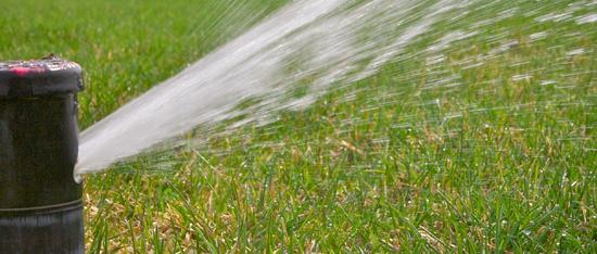 watering tips for your lawn and garden  minnesota pollution, Natural flower