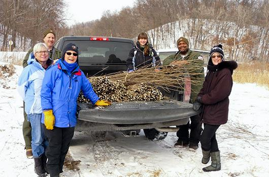 volunteers-and-truck-of-cottonwood-cuttings