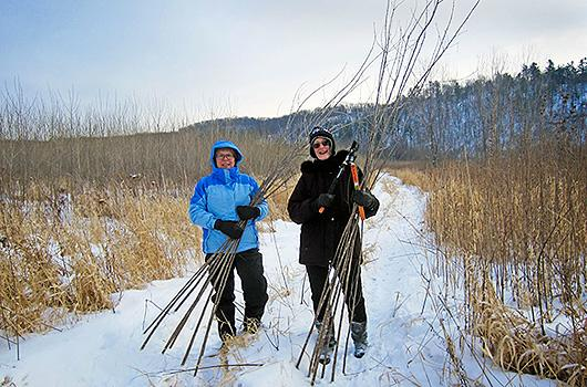 volunteers-cut-cottonwood-saplings