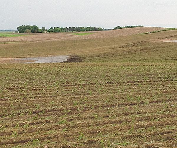 west-otter-tail-field-no-erosion