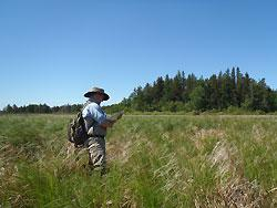 Research Scientist Michael Bourdaghs records plant species observations in a Cass County marsh. The vegetation data are used to gauge the overall quality of the wetland with Floristic Quality Assessment metrics and criteria.