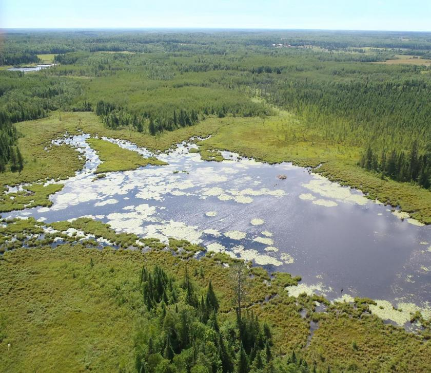 Aerial view of large wetland with open water, marsh, and pine trees