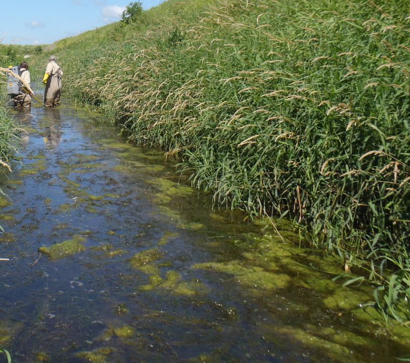 Water quality monitoring on the Winnebago River