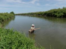 MPCA scientists study the aquatic insects and fish in the Des Moines River as indicators – similar to symptoms – of the river's health.