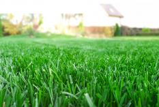 Close up of freshly cut green grass.