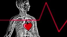 Black and white graphic showing circulatory system and red heart in a human body with a red E K G line overlay