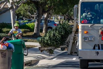A Christmas tree being loaded into a garbage truck as a boy on a bike looks on
