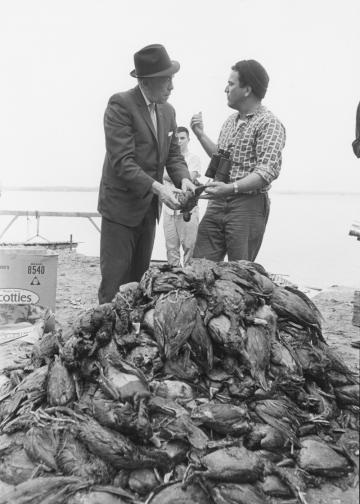 Governor Karl Rolvaag and citizen looking at pile of dead ducks after oil spill polluted the Minnesota River.
