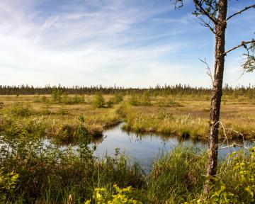 Peatland in Aitkin County