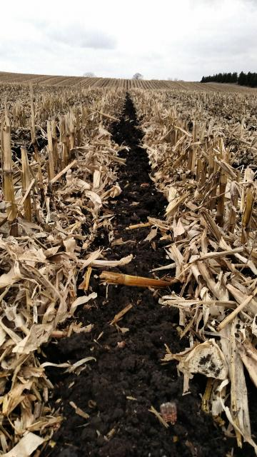 Strip tillage in a field of corn stubble