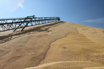 big pile of grain